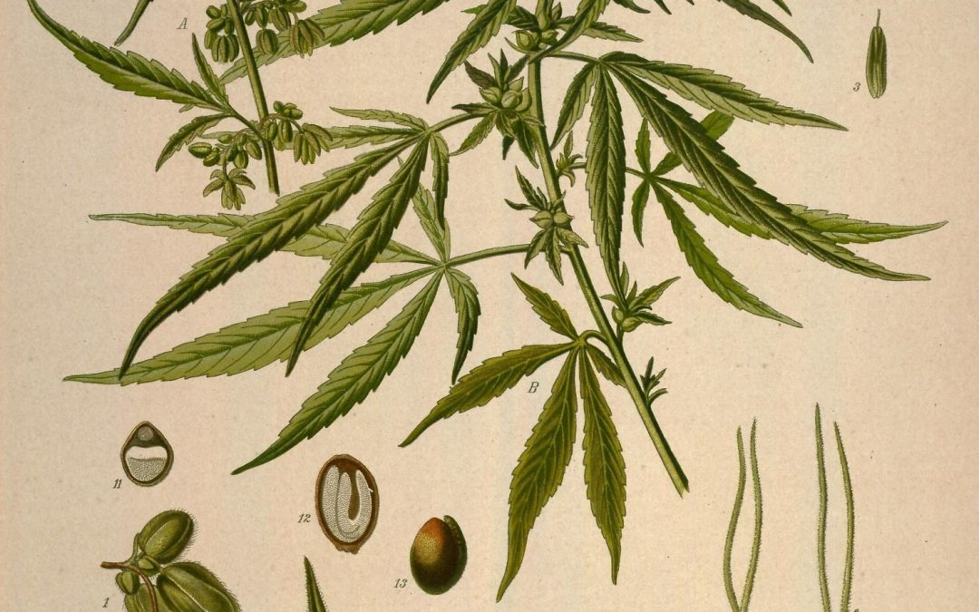 Cannabis to Marihuana: What's In a Name?